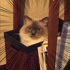 猫吸あず太🍎のユーザーアイコン