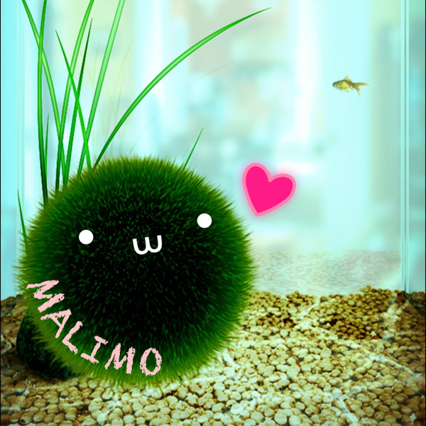 MALIMOのユーザーアイコン