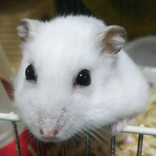 白鼠のユーザーアイコン