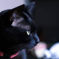 黒猫大和のユーザーアイコン