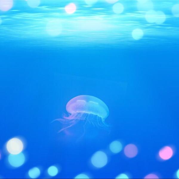 Aqua drop ✩︎‧₊ 眠れない面接 & ノーチラス エアハモのユーザーアイコン