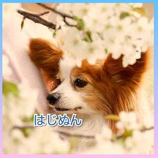 はじぬん@4/1で3周年!のユーザーアイコン