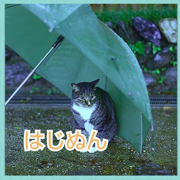 はじぬん@はじみた結成1周年🤗のユーザーアイコン