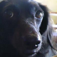 うた犬のユーザーアイコン