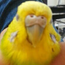 雀のSattyのユーザーアイコン