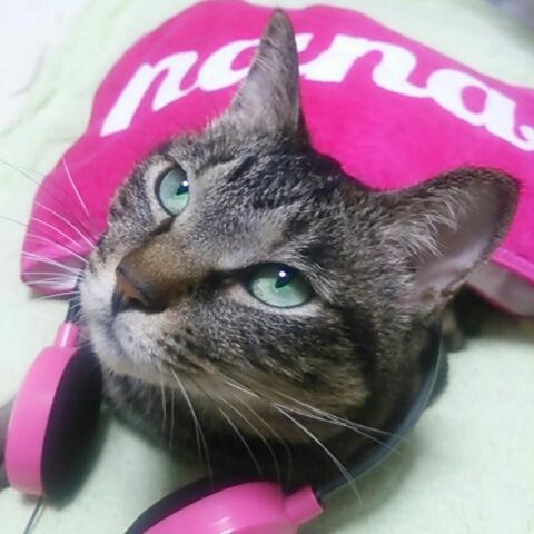 SakuraMariのユーザーアイコン