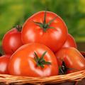 トマトケチャップのユーザーアイコン