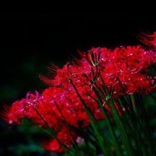 木苺のユーザーアイコン