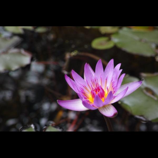 waterlilyのユーザーアイコン