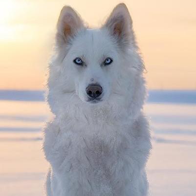 冬野 雪音/yukineのユーザーアイコン