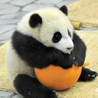 大福パンダのユーザーアイコン