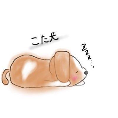 こたいぬ@あこぎ弾きのユーザーアイコン
