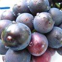 葡萄娘のユーザーアイコン