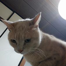 🍎凪@🐱猫派😸🍎のユーザーアイコン