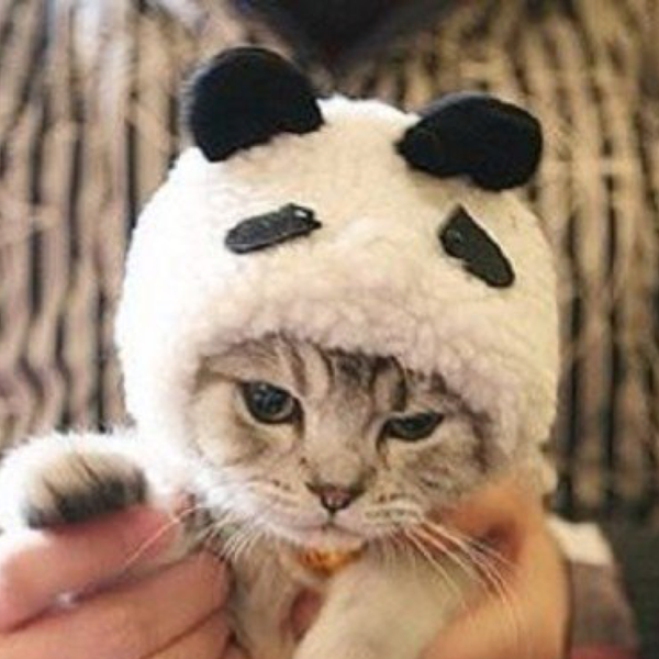 猫パンダ@癒し系ニャンコのユーザーアイコン