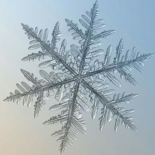 雪やこんこん's user icon