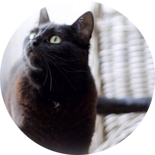 雪白's user icon