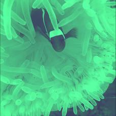 maho's user icon