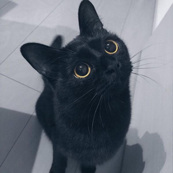 トメ猫🐈@Pretenderのユーザーアイコン