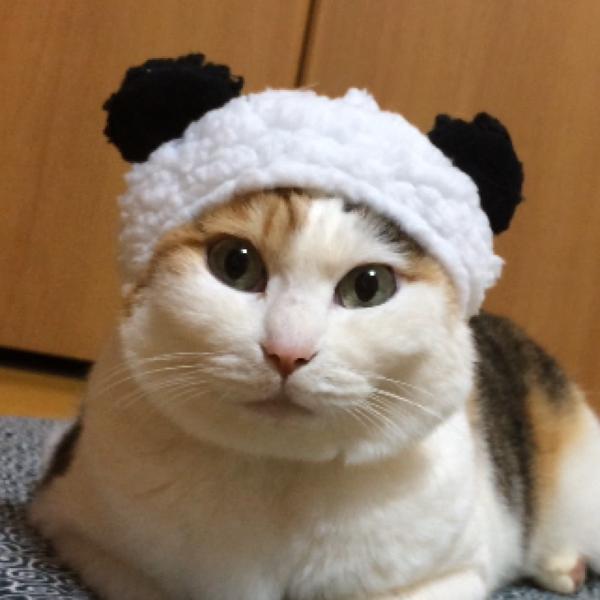 なっちゃん@三毛猫スタジオ(フォローありがとうございます💕)のユーザーアイコン