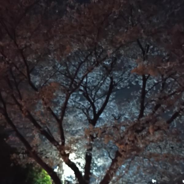 花見小路ユラのユーザーアイコン