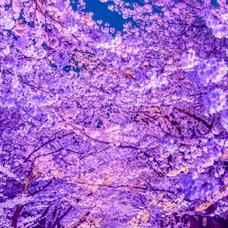 紫暮(しぐれ)のユーザーアイコン