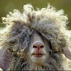くれい羊のユーザーアイコン