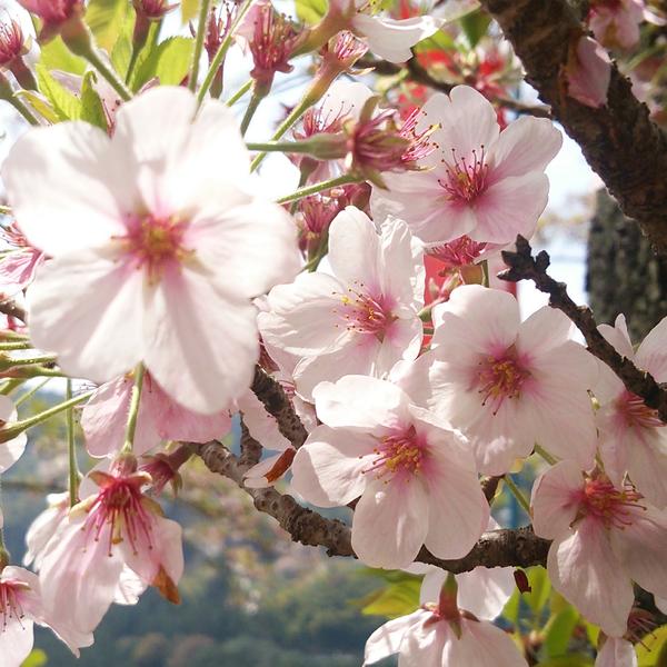 桜🌸/cherry🍒のユーザーアイコン