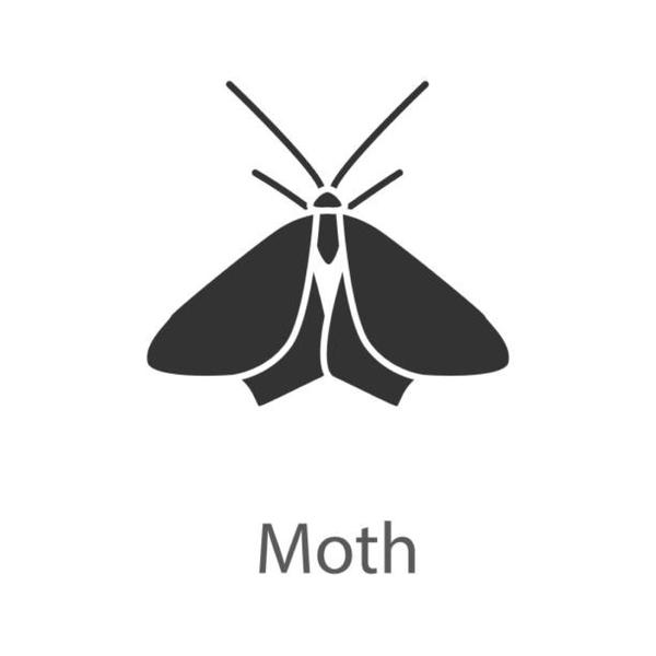 蛾を持つ。(CV:popadrop)のユーザーアイコン