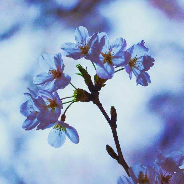 綺咲のユーザーアイコン
