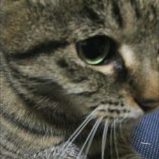 裕猫のユーザーアイコン