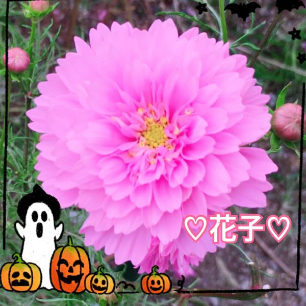 花子💐nana開いたら自分の顔にびっくりしたので花にしましたwのユーザーアイコン