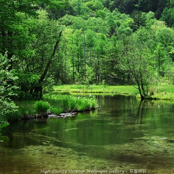 森樹のユーザーアイコン
