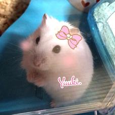 Yuuki.のユーザーアイコン