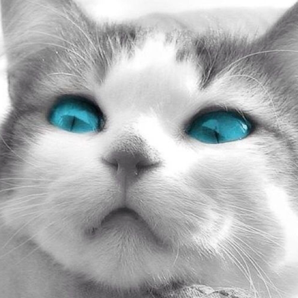 猫丸のユーザーアイコン