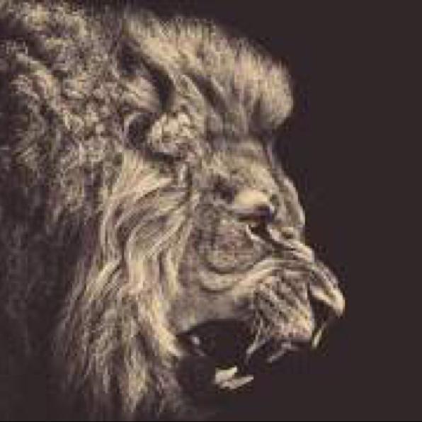 LIONさんのユーザーアイコン