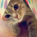 あや@猫好き