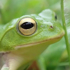 カエル(顔面特級呪物)のユーザーアイコン
