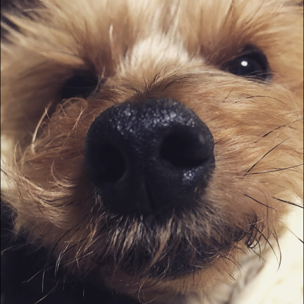 Kuma_beardのユーザーアイコン