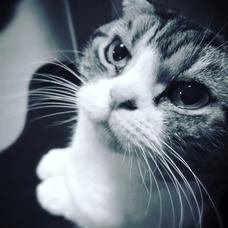 Catmanのユーザーアイコン