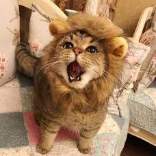 lionのユーザーアイコン