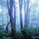 霧さん。のユーザーアイコン