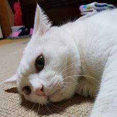 かない@役者猫のユーザーアイコン
