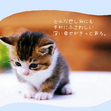 きむち's user icon