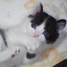 田中屋本舗はただの猫好きのユーザーアイコン