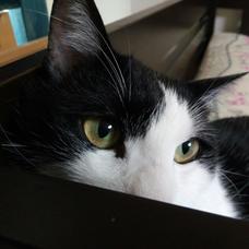 ナツ猫@受験生のユーザーアイコン