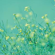 花(コラボ大歓迎♪)のユーザーアイコン