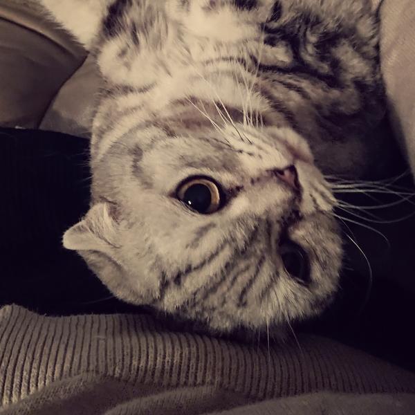 寝猫のユーザーアイコン