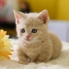 野良猫 streycatのユーザーアイコン