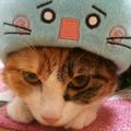 kao(・ω・)@紅一葉アレンジup